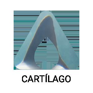 Cartilagos de Tiburón